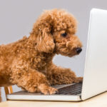 Pages V Sessions: And How Many Page Views Per Session Should My Pet Blog Get?