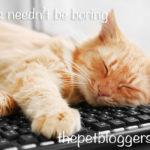 WordPress Categories: How to set up categories in your blog