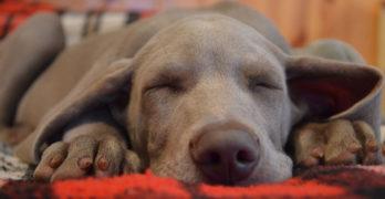 Pet Blog Case Study