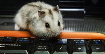 Pet Blog Progress Report September 2016