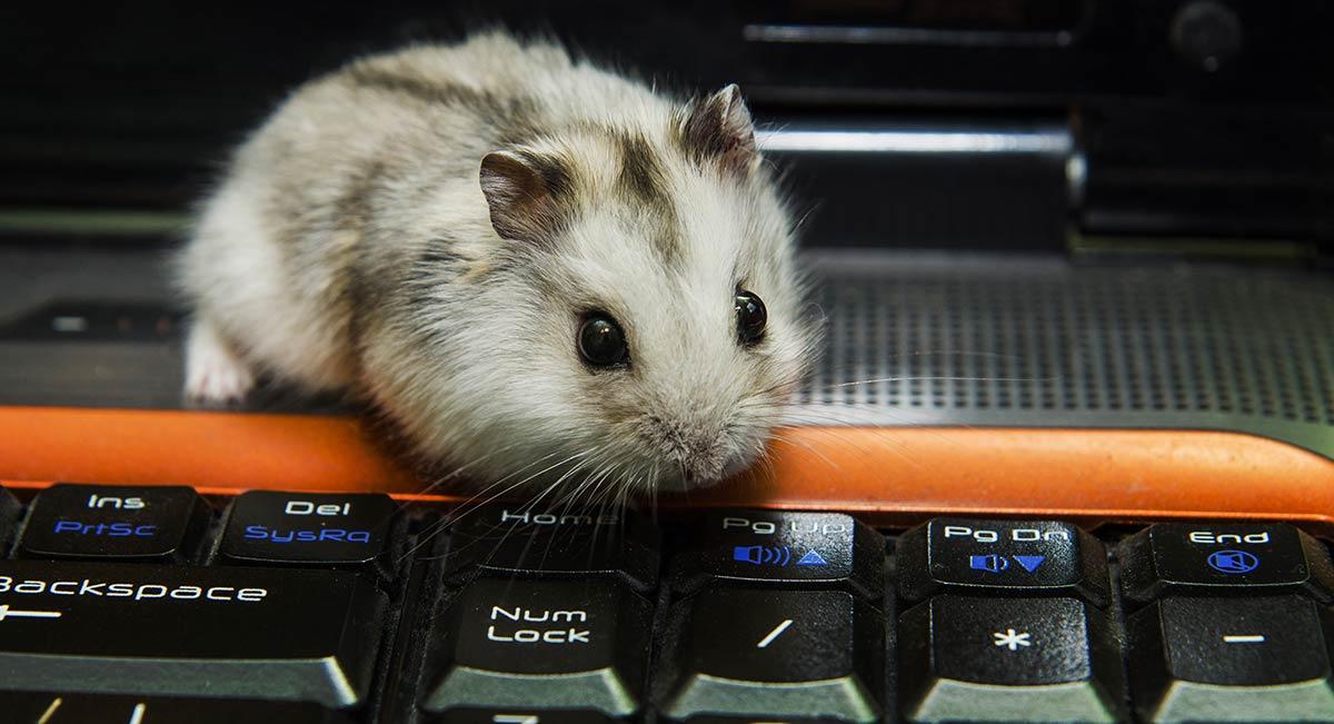 pet-blog-case-study-report